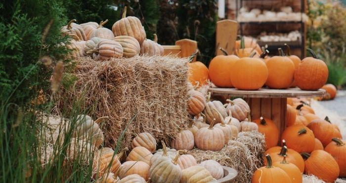 Autumn Frost Pumpkins