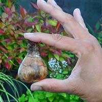Bulb planting depth