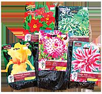 Summer Blooming Bulbs and Perennials