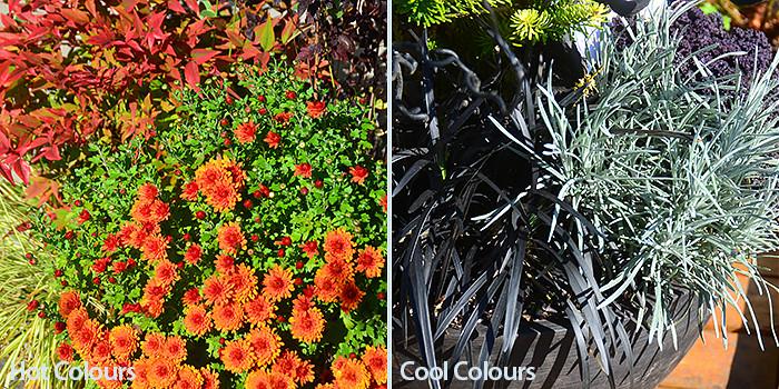 Plant Colour Palettes - Hot Colours and Cool Colours