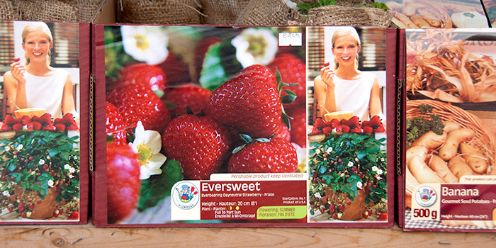 Eversweet Strawberry Runners