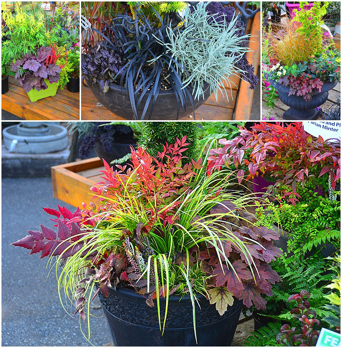 Fall Containers and Planters