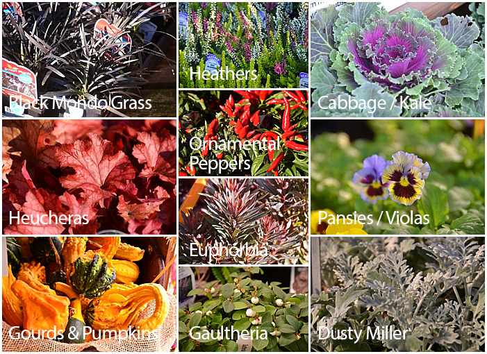 Great Plants for Fall Planters - Fillers