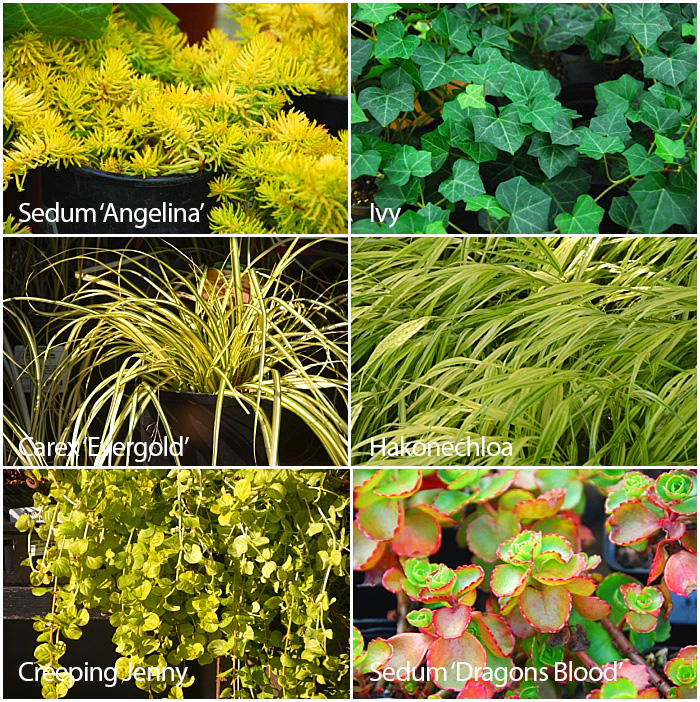 Great Plants for Fall Planters - Spillers