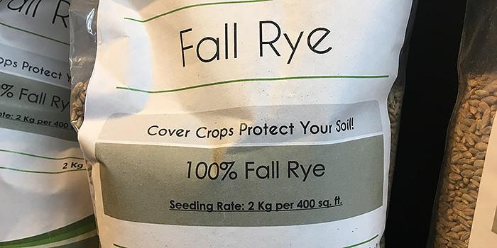 Fall Rye