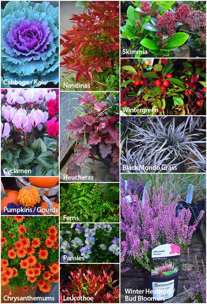 Plants For Use as Fillers