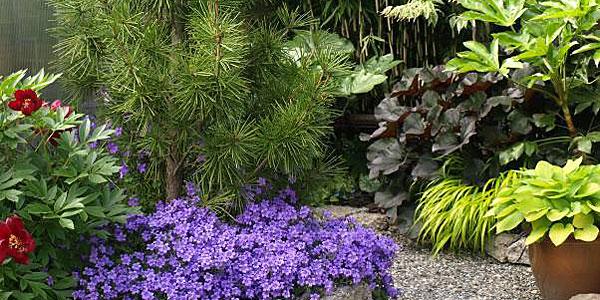 gardening in summer
