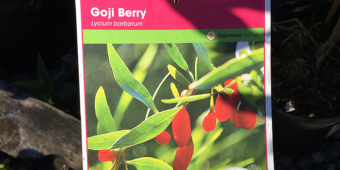 Goji Berry / Wolfberry