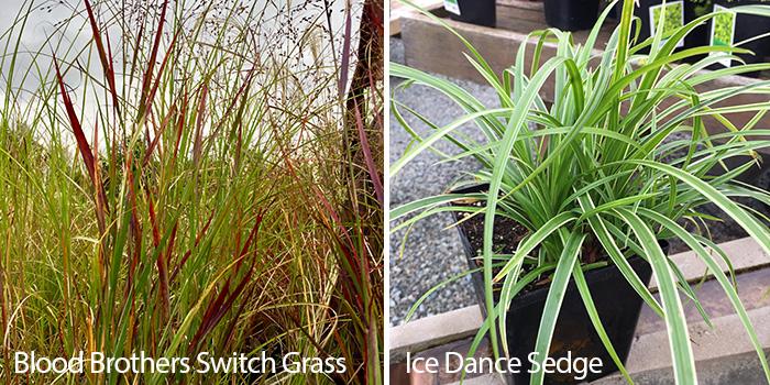 Ornamental Grasses 2