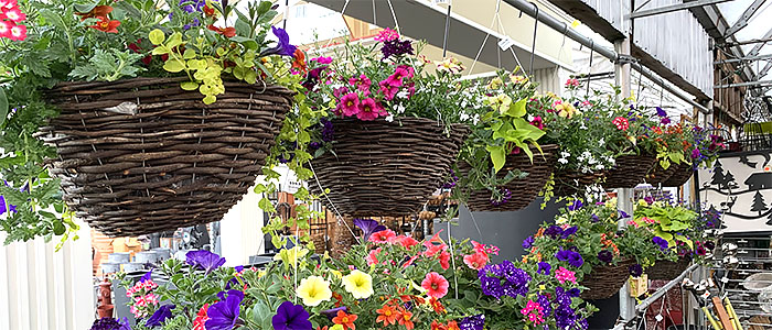Group of Hanging Baskets