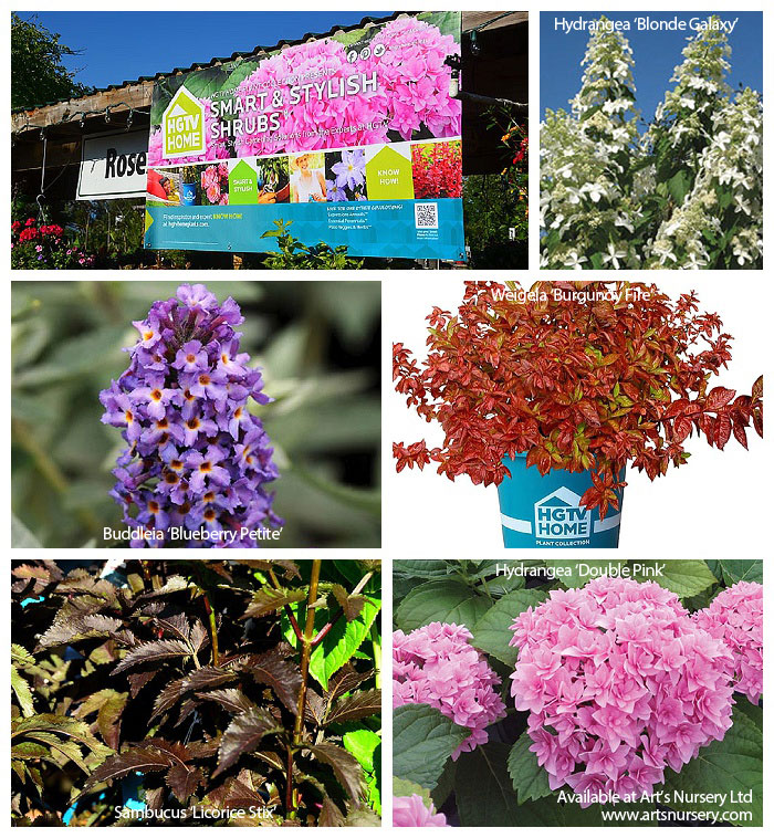 Smart and Stylish Shrubs from the HGTV Collection