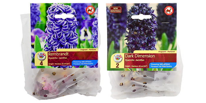 New Hyacinth Varieties for 2015