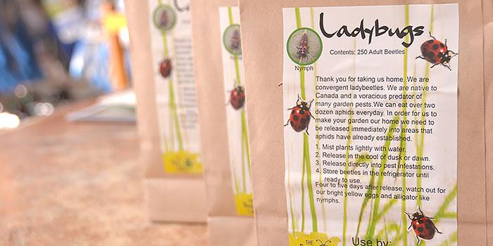 Buy Lady Bugs