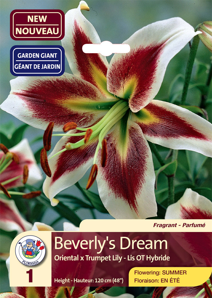 beverlys dream lily