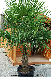 Overwintering Tips For Tropicals