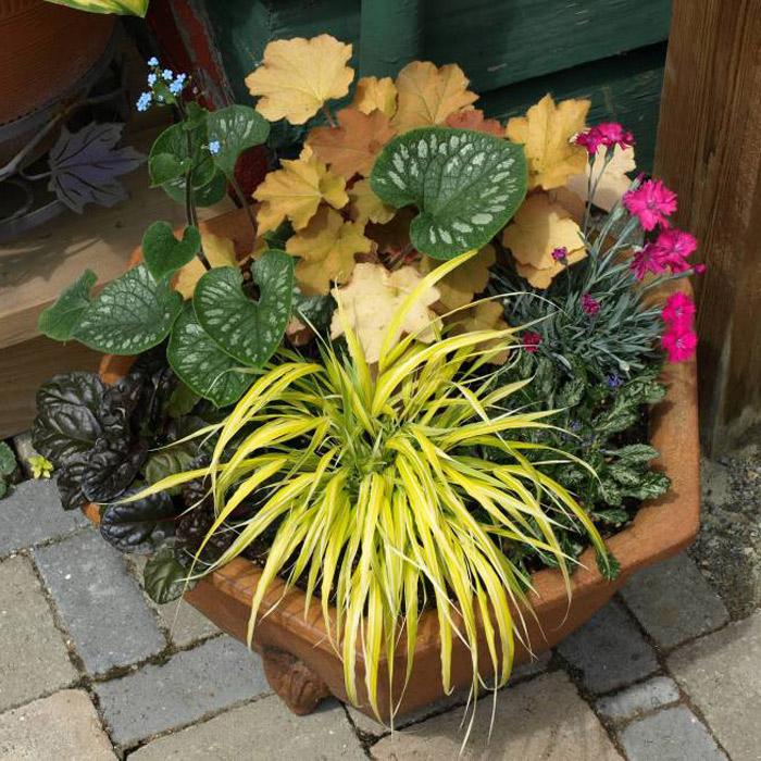 Perennial Pot 1