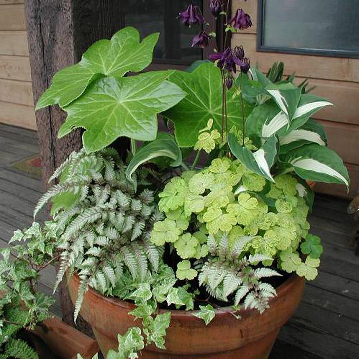 Perennial Pot 2
