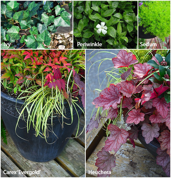 Plants For Use as Spillers
