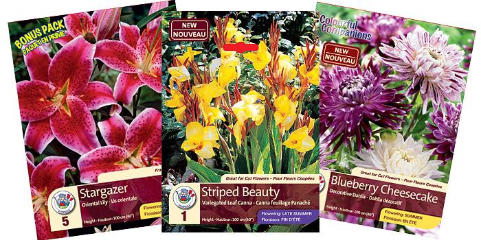 summer bulbs - dahlias | cannas | gladiolus | lily