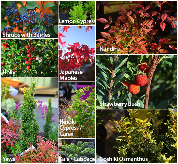 Plants For Use as Thrillers