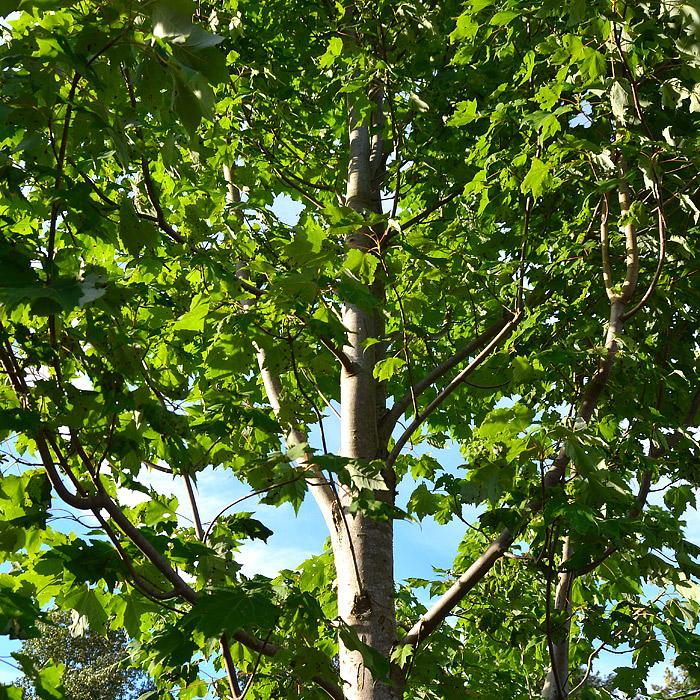 Tree Pruning