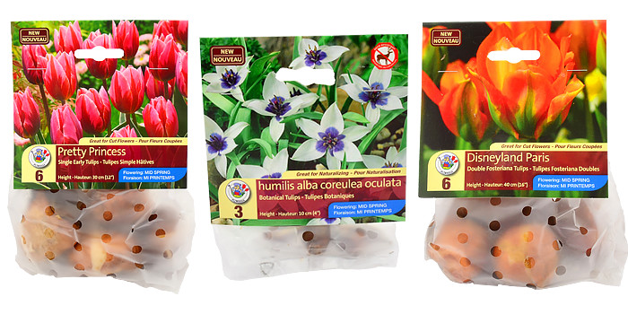 More New Tulip Varieties for 2015