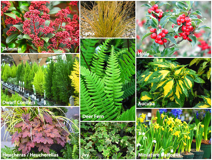 Plants for Winter Planters