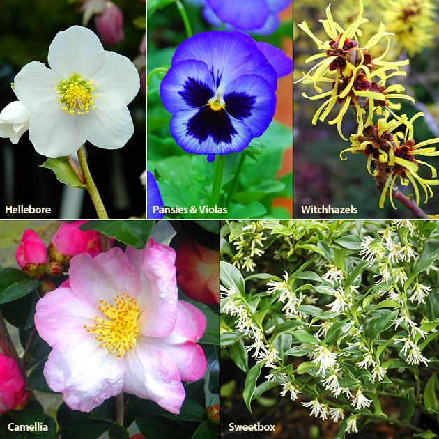 Winter Blooming Plants