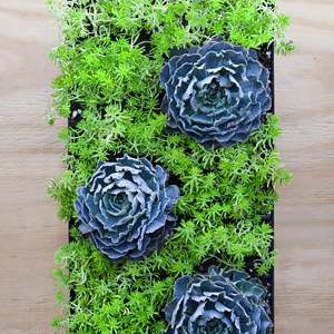 Vertical Planters