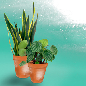 MONTHLY EVENT - House Plant Happy Hour