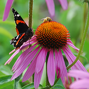 Pollinator Planter - Feed the Bees, Butterflies, & Hummingbirds!