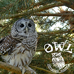 OWL Rehab - Feature Presentation