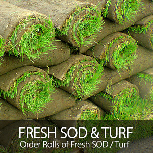 SOD/Turf Sales