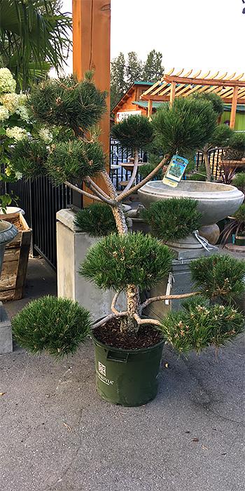 topiary rentals