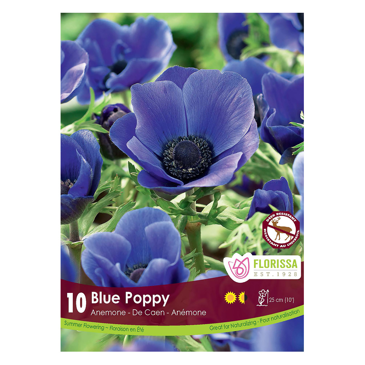 Anemone De Caen 'Blue Poppy' Bulbs