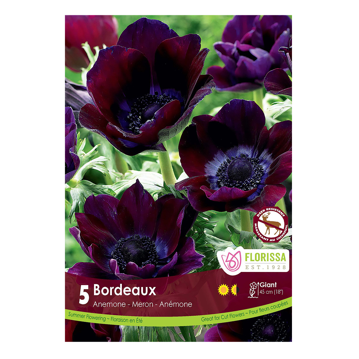 Anemone De Caen 'Bordeaux' Bulbs