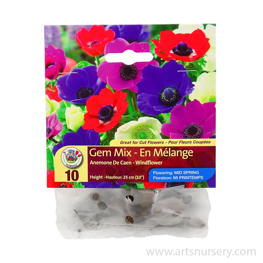 Anemone De Caen Gem Mix Bulbs