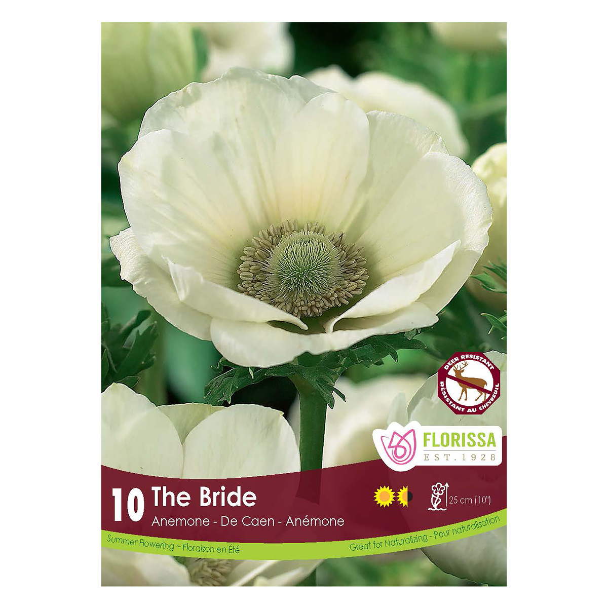 Anemone de Caen The Bride Bulbs
