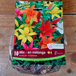 Lily Asiatic Mix Bulbs