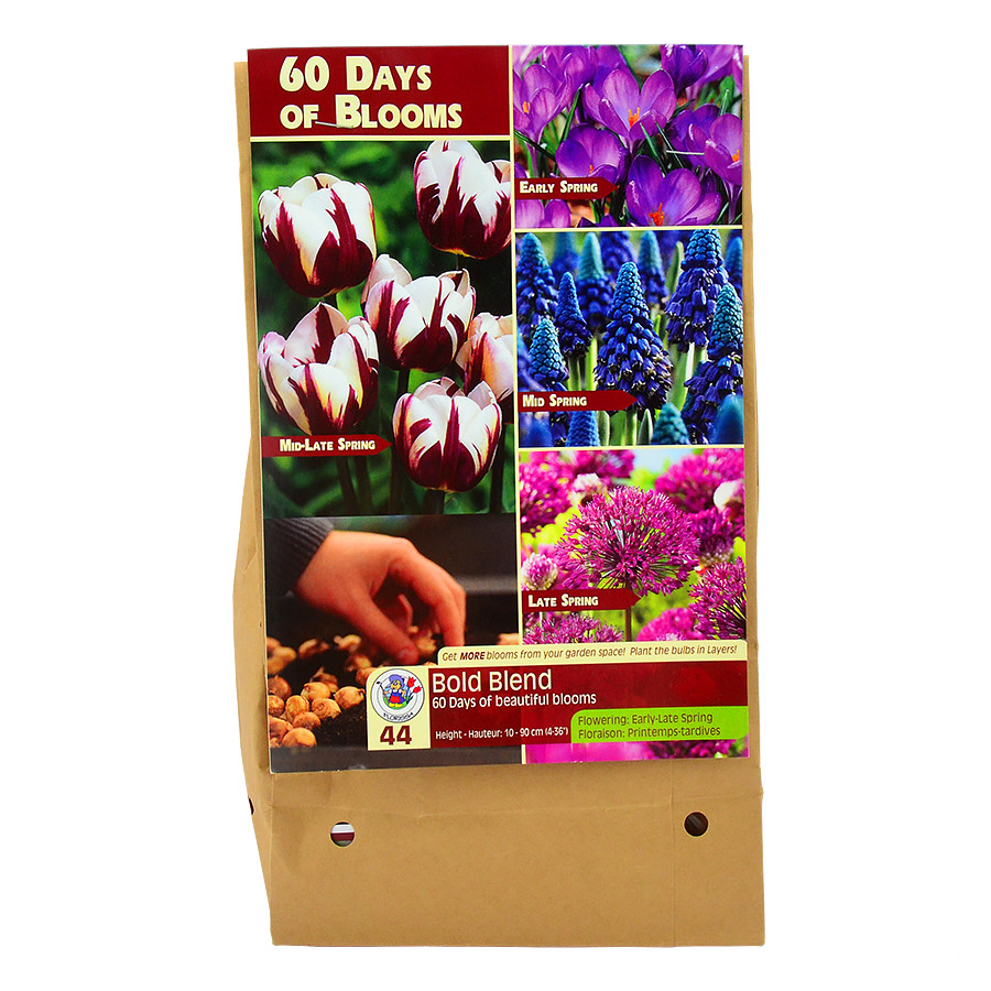 60 Days of Blooms Bold Blend Flower Bulb Collection