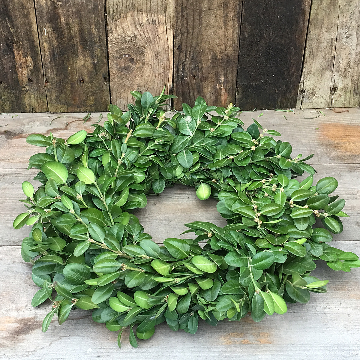 Christmas Wreath Boxwood 12in