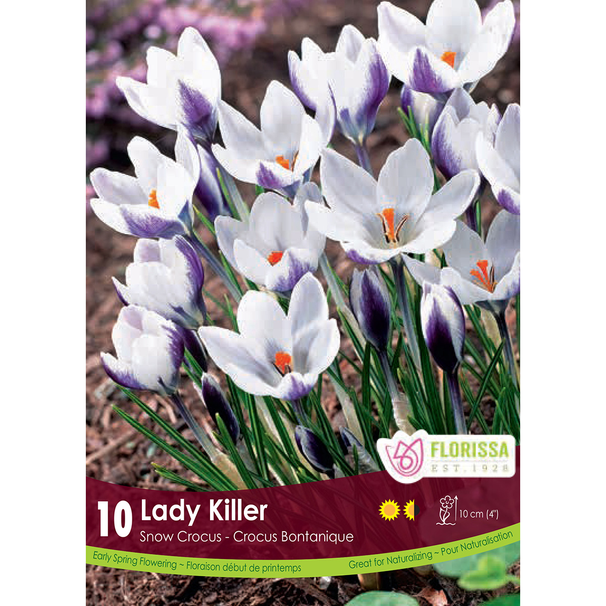Crocus 'Lady Killer' Bulbs