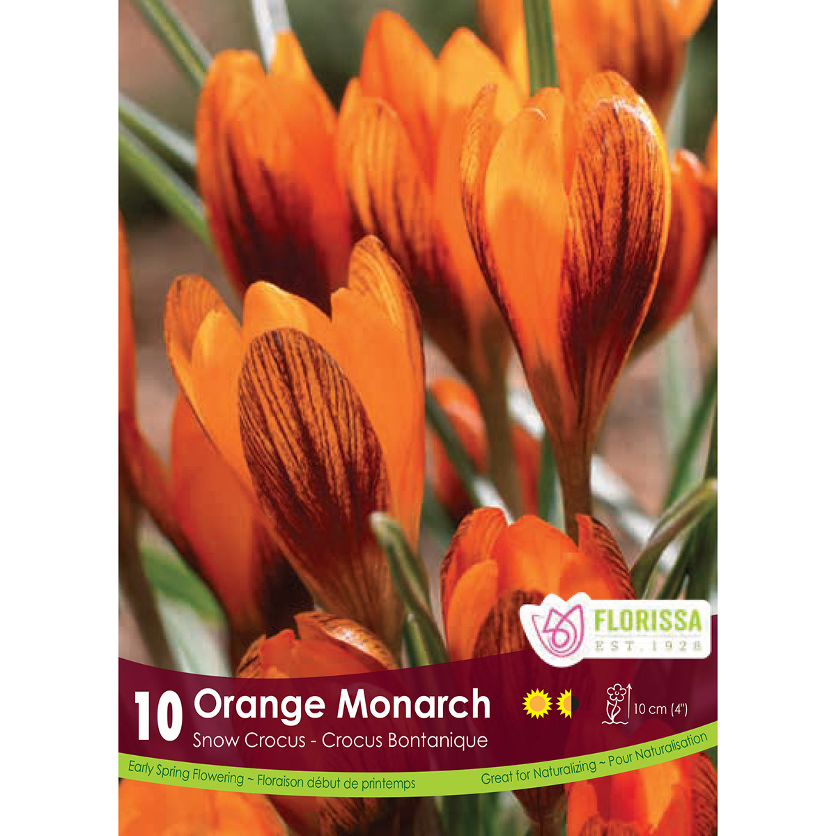 Crocus 'Orange Monarch' Bulbs