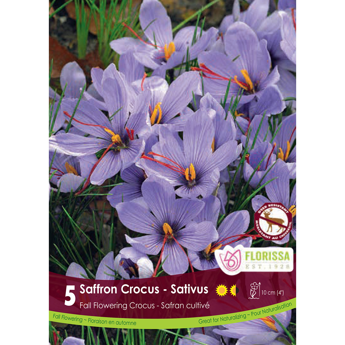 Crocus 'Sativus' Bulbs