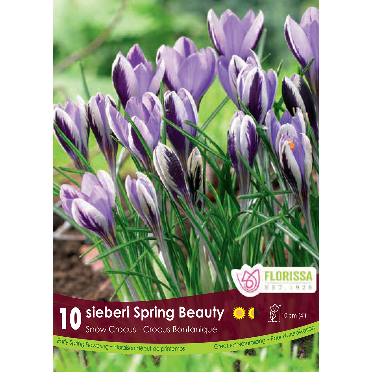 Crocus 'Spring Beauty' Bulbs