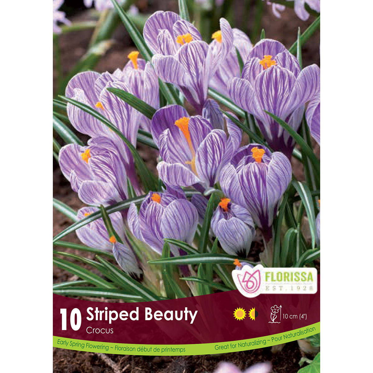 Crocus 'Striped Beauty' Bulbs