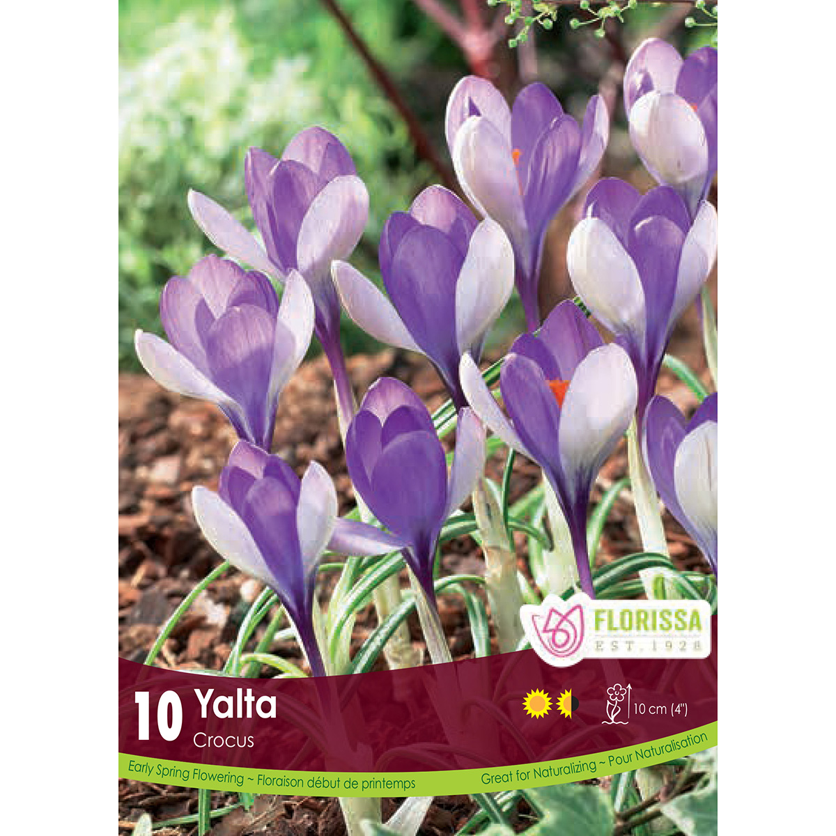 Crocus 'Yalta' Bulbs