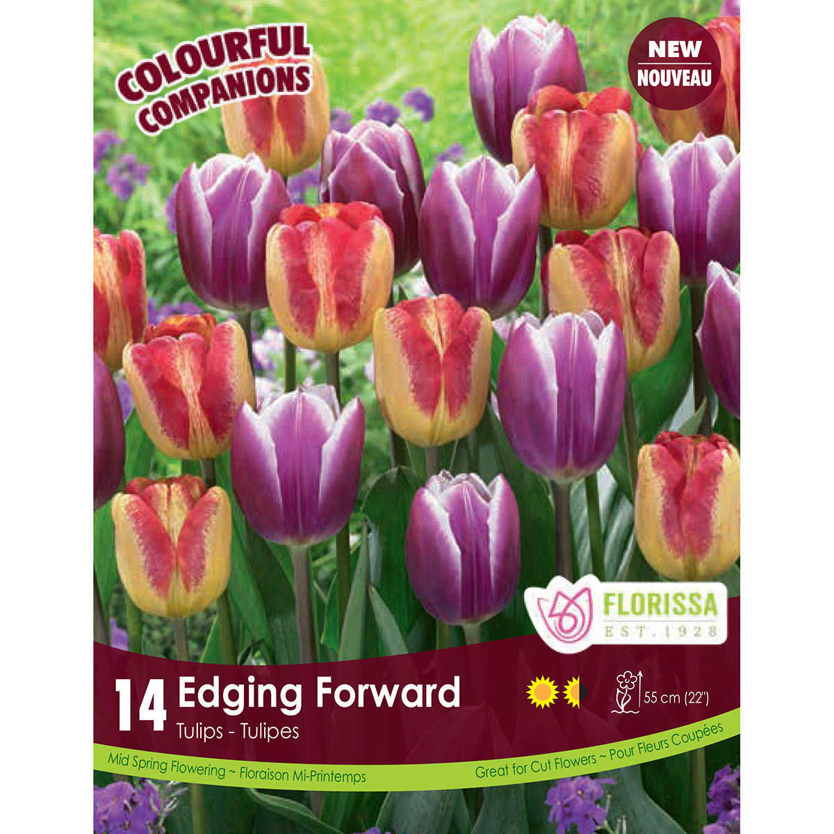 Colourful Companions Tulipa 'Edging Forward' Bulbs