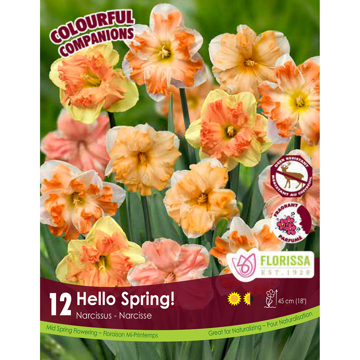 Colourful Companions Narcissus 'Hello Spring' Bulbs