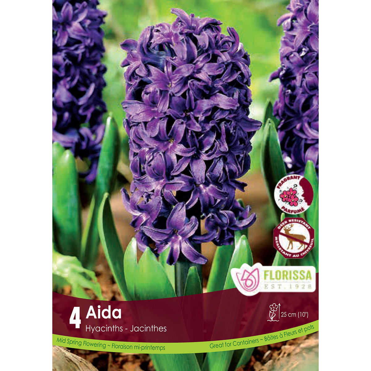 Hyacinth 'Aida' Bulbs 4Pk